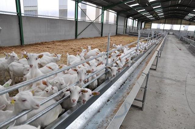 Sarl andr dujardin vente et r paration de mat riel agricole construction m tallique - Tapis alimentation ovin occasion ...